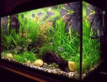 akwarium, rybki